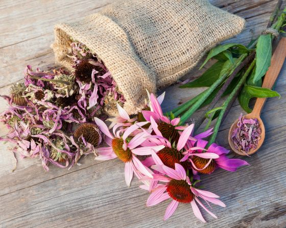 What is Echinacea and how can it help?